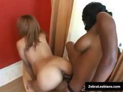 zebra beauties - ebon lesbo hotties fuck