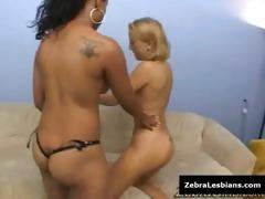 zebra lesbian cuties - ebon lesbo women fuck
